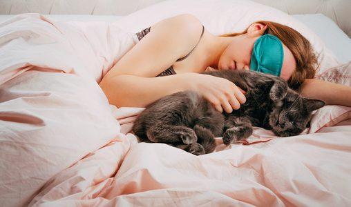 איך לדאוג ללילות שקטים עם החתול