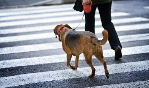 Raising a Pet in the City: 6 Things You Need to Know