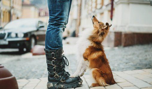 גידול כלבים קטנים בעיר – אתגרים ופתרונות
